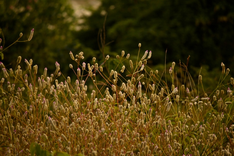 wild flower lonavala fs