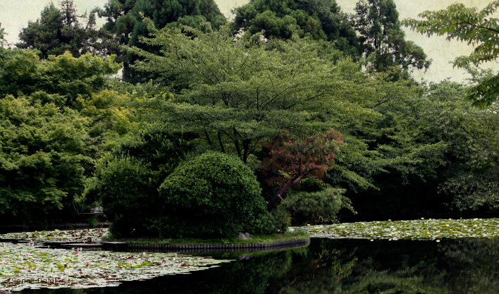 garden at golden pavilion kyoto fs