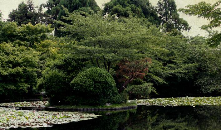 garden at golden pavilion kyoto fs