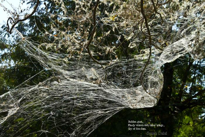 Woven Web