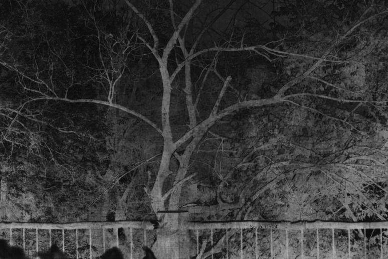 mono tree fs