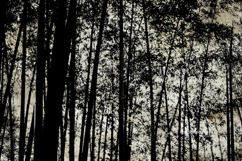 tree fs