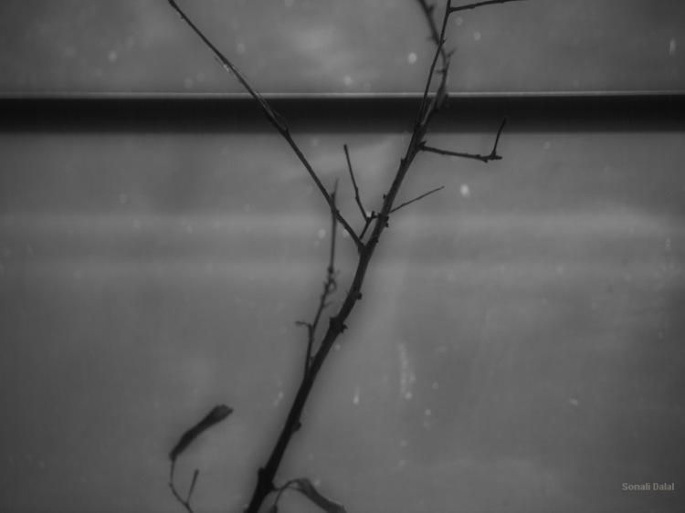 through my window_fs