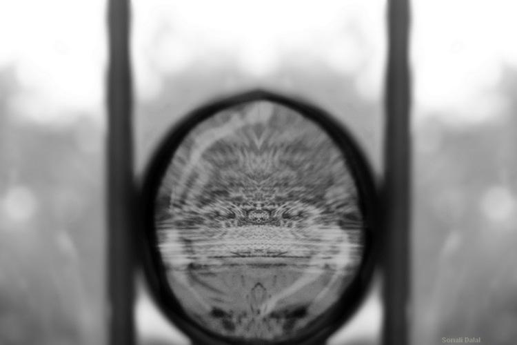 mirror image_fs