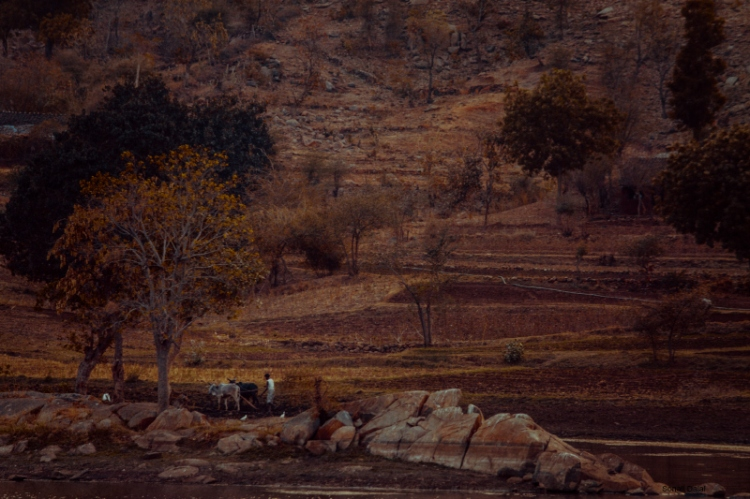 poshina landscape