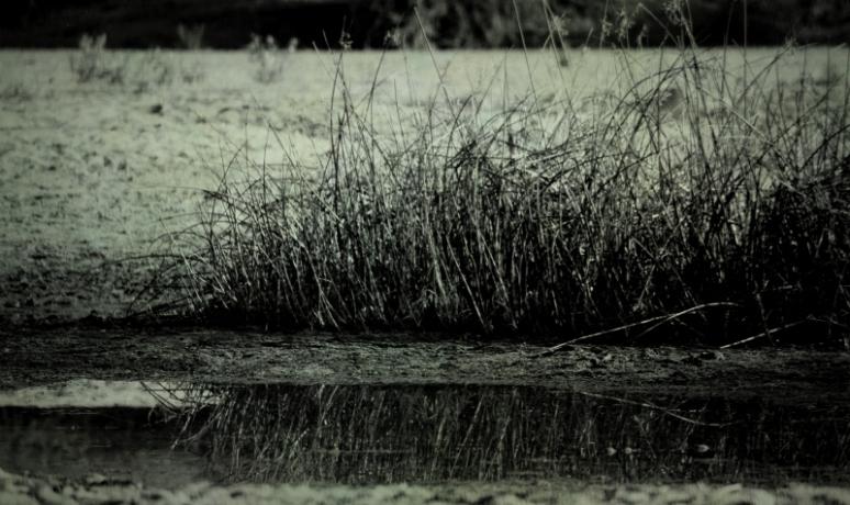 reflection mono