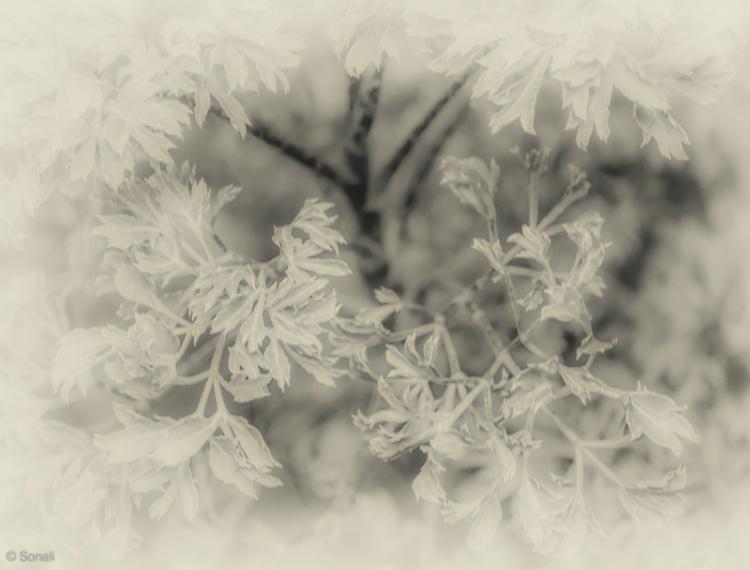 Nature 15082014-1-33