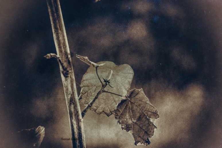nature leaves-11082014-5