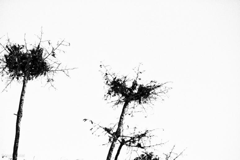 IMG_9516-Edit-1
