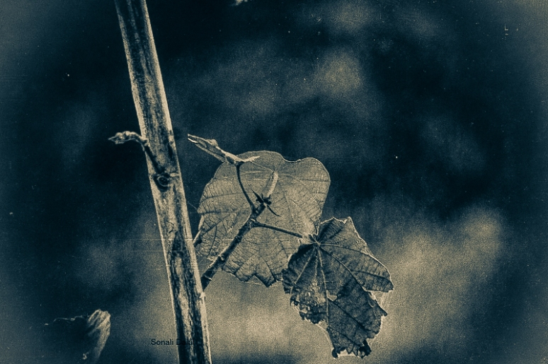 nature leaves-11082014-5-1