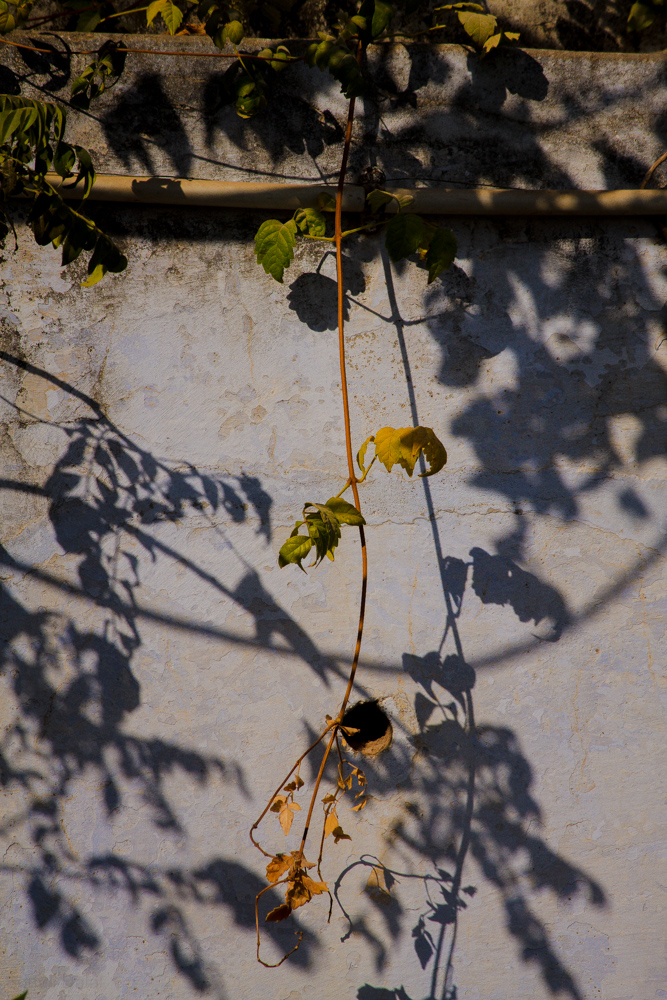 Swinging shadow